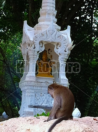 Buddhist Monkeys in Thailand